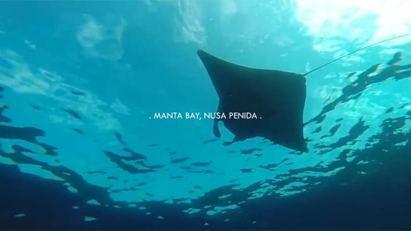 Manta Dive. Nusa Penida